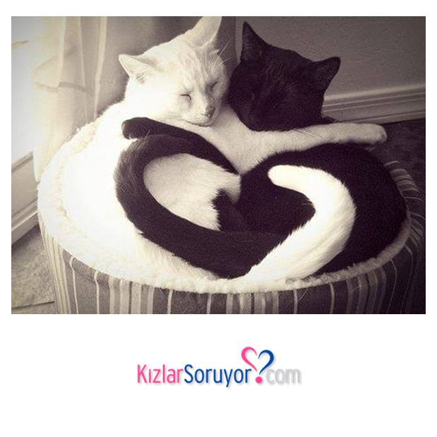 Aşk...
