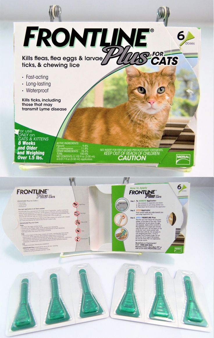 Flea and Tick Remedies 20749: Frontline Plus For Cats 8 Weeks And Older Weighing Over 1.5Lbs 6 Doses Nob* -> BUY IT NOW ONLY: $49.99 on eBay!