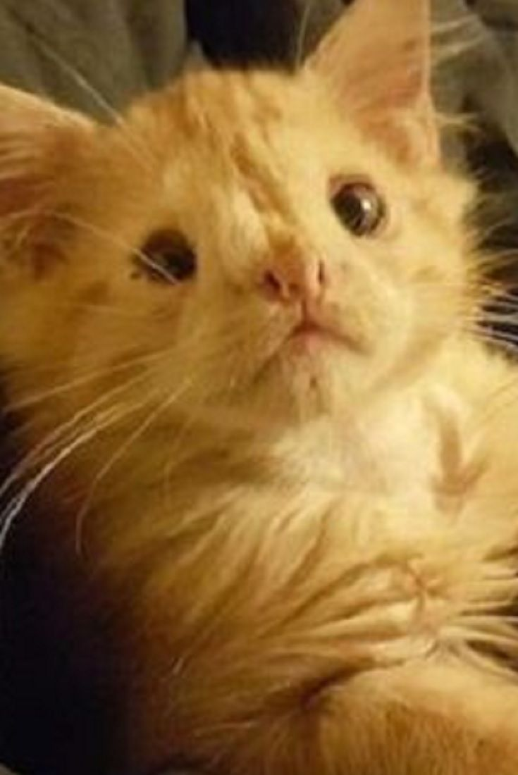dc3fb6388acfde Everyone Rejected This Kitten For Being  Too Ugly . Then Someone Saw His  Beauty (VIDEO)  cat  kitty  animals  pets …