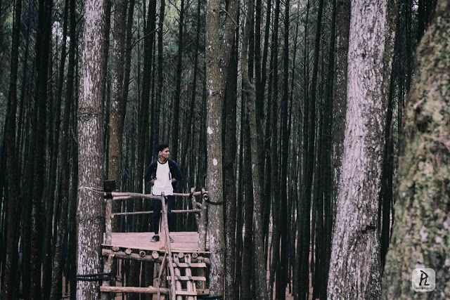 Hutan pinus mangunan, imogiri, jogja