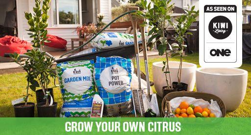 Tui Garden   Citrus Growing Guide
