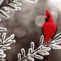 Birds photo:  240679-bigthumbnail.jpg
