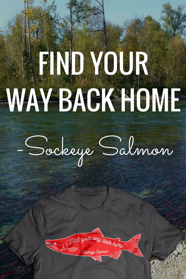 how to catch salmon fly fishing