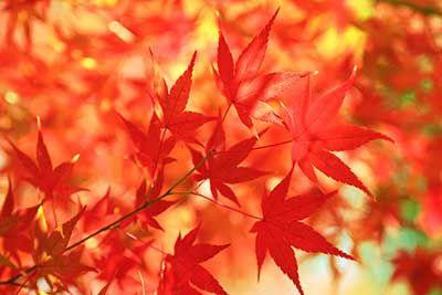 秋の紅葉画像
