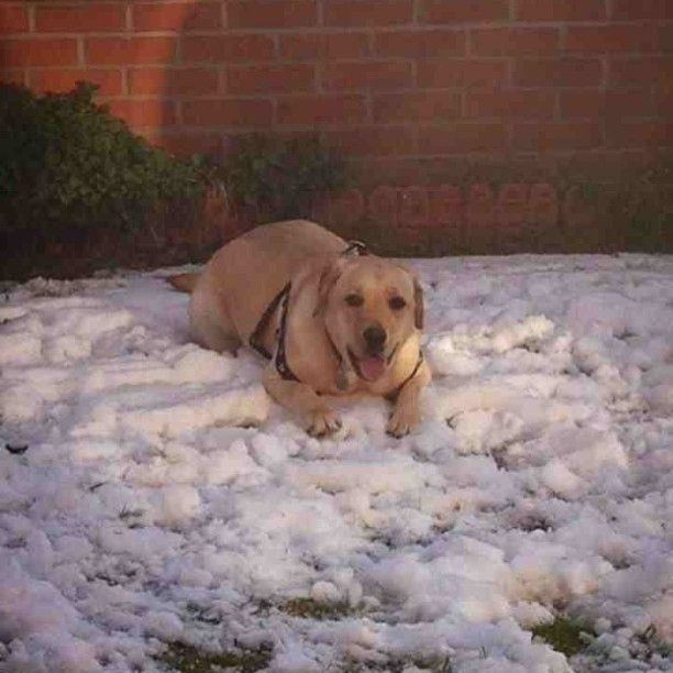 The only payne who loves the snow :-) (uploaded by Ruth Payne)