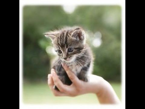 Cute Baby Kittens - TOP 10 Very Cute Cats: Video Compilation NEW MORE VIDEOS HERE https://www.youtube.com/watch?v=InDJc2L_5dA&list=PLC_HjotBFMpNqd0u6cYK0NtHBXcOIEEoD   SUBSCRIBE: http://www.youtube.com/user/TheFederic777?sub_confirmation=1   #Kittens #Cats #CuteKittens