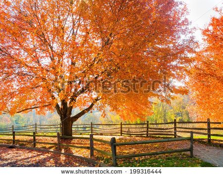 Spectacular Autumn colors in Holmdel Park in New Jersey. - stock photo