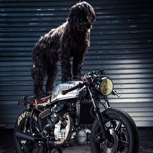 The Distinguished Gentleman's Ride has had dogs participate in it before usually they are in sidecars, this is a first. Photo courtesy @pipeburn - @dogsofinstagram #honda #cx500 #brat #caferacer #bobber #classic #gentlemansride #ridedapper #dgr2014