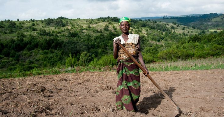One Acre Fund is a nonprofit social enterprise working with more than 500,000 smallholder farmers in Sub-Saharan Africa to eradicate hunger and poverty.