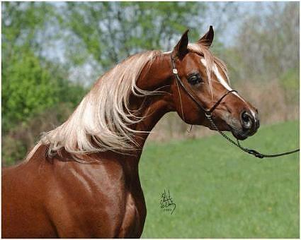Chestnut with flaxen mane | Horses-Unique Colors ...