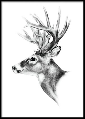 Deer black and white, poster. Affisch i svartvitt. Poster med svartvit illustration av en vacker ren. En riktigt snygg och stilren affisch till olika typer av inredning, fungerar både till modern och klassisk stil. Kombinera gärna med fler svartvita posters av vackra djur och rama in, så har du skapat en snyggt kollage.
