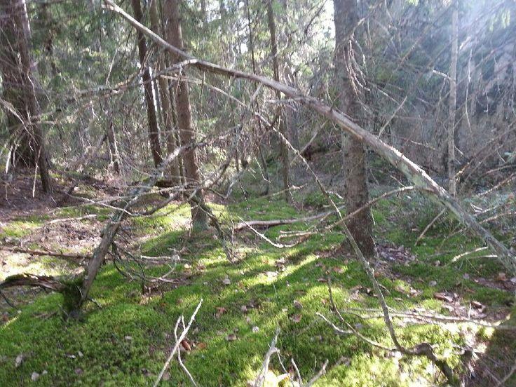 Another feeling in Finnish wood. Photo by Pirjo Salo.