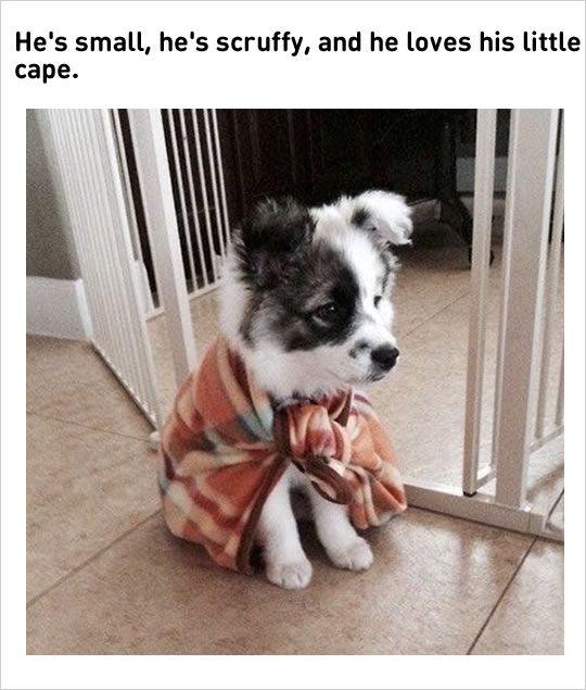 cute puppy wearing cape