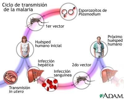 Ciclo de transmision de la malaria