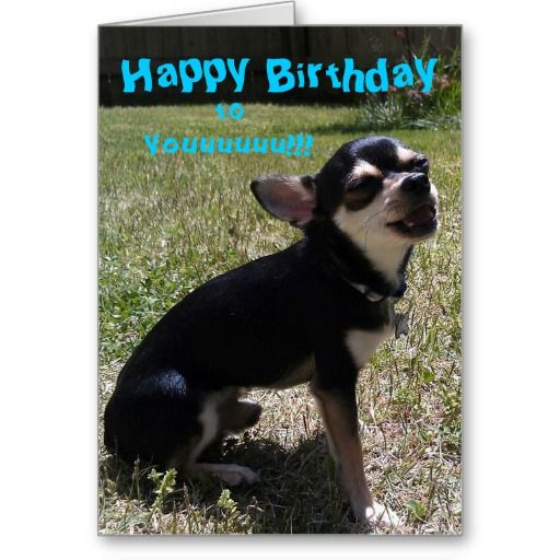=>>Cheap Chihuahua singing Happy Birthday! Greeting Card Chihuahua singing Happy Birthday! Greeting Card so please read the important details before your purchasing anyway here is the best buyReview Chihuahua singing Happy Birthday! Greeting Card Review from Asso...Cleck link More >>> http://www.zazzle.com/chihuahua_singing_happy_birthday_greeting_card-137148746467479852?rf=238627982471231924&zbar=1&tc=terrest