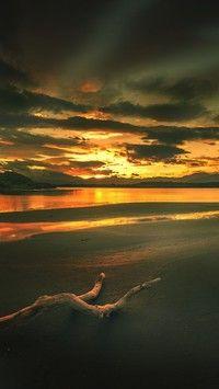 Suchy konar na brzegu morza