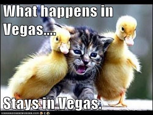 What Happens In Vegas Stays In Vegas Funny Cat Photos Cute