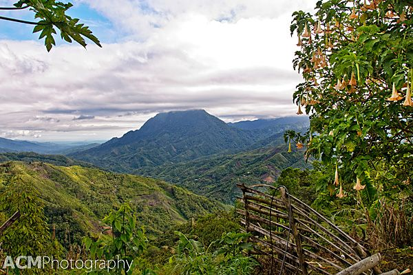 Exploring Kinabalu Park UNESCO Site in Malaysian Borneo