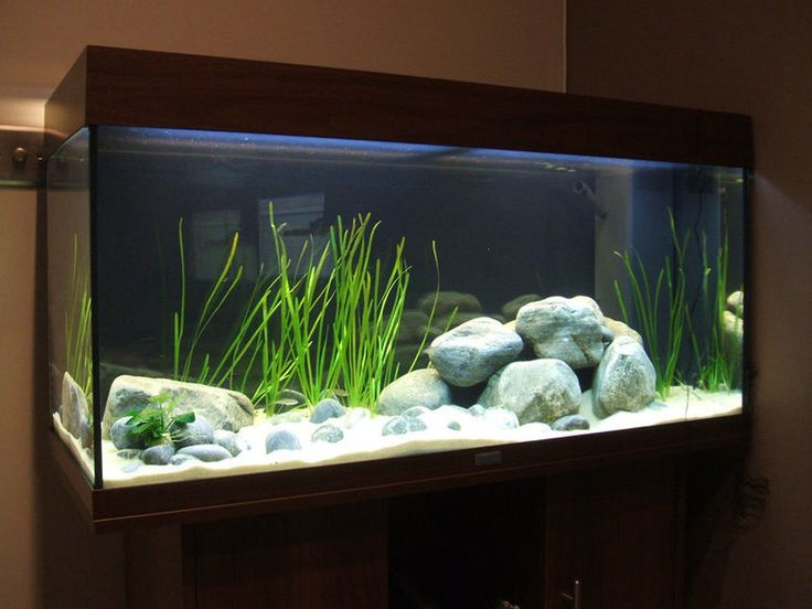 die besten 25 aquarium einrichten ideen auf pinterest. Black Bedroom Furniture Sets. Home Design Ideas