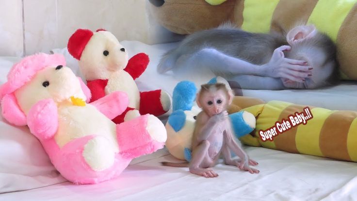 Cutest Christina is Learning To Walk, Look So Cute, Pet Cute Baby Monkey Christi…
