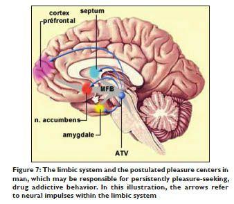 nucleus accumbens dopamine - limbic system & reward