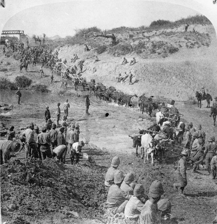 Oxen drawn column of the British Army carrying an artillery gun (5 inch gun ) across a river, © IWM (Q 71955)