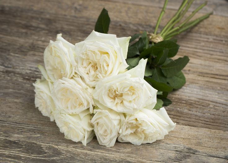 scented rose garden white ohara scented is a beautiful white pink garden style rose wholesaled in batches of 12 stems ideal for floristry work