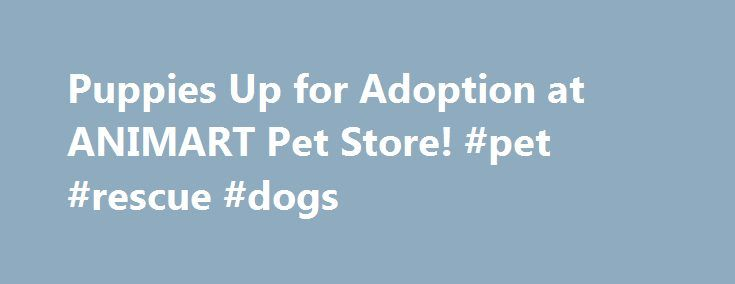 Puppies Up for Adoption at ANIMART Pet Store! #pet #rescue #dogs http://pet.remmont.com/puppies-up-for-adoption-at-animart-pet-store-pet-rescue-dogs/  Puppies Up for Adoption at ANIMART Pet Store! We are licensed through the USDA and the DATCP (License # 284729-DS For Madison) (License # 403317-DS For Beaver Dam). Please check regularly, as these are updated often Here's What is Included with All of ANIMART Pet Store's Puppies 20% OFF Supplies with the adoption of a puppy! (Valid day of…