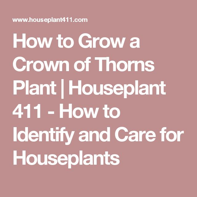 How to Grow a Crown of Thorns Plant | Houseplant 411 - How to Identify and Care for Houseplants