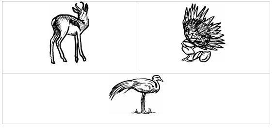 springbok embleem van suid afrika - Google Search