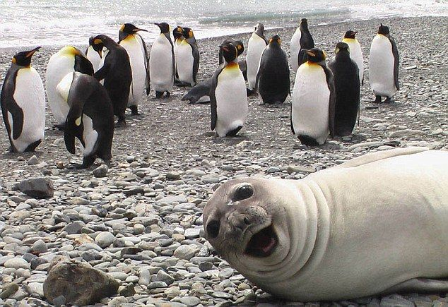 A seal makes sure it's the star of the photo.