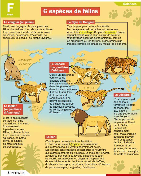 Fiche exposés : Six espèces de félins