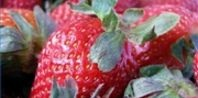 When to Plant Strawberries in Zone 5 | eHow.com