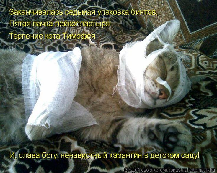 Заканчивалась седьмая упаковка бинтов, Пятая пачка лейкопластыря Терпение кота Тимофея И, слава богу, ненавистный карантин в детском саду!