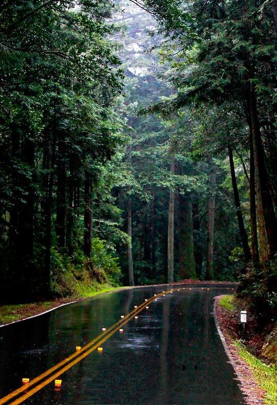 bluepueblo: Rain Forest, Mill Valley, California photo by catherineshyu