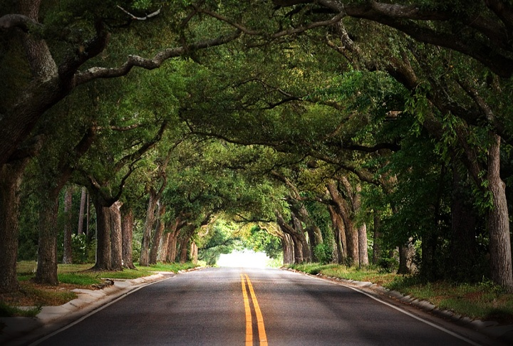 Tree Tunnel on 12th Ave in Pensacola, Florida