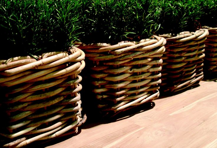 Rattangefässe bepflanzt mit Buchs