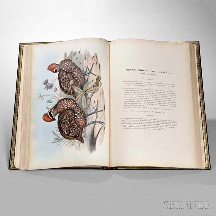 Gould, John (1804-1881) A Monograph of the Odontophorinae, or Partridges of America. London: Richard & John E. Taylor by the Author, 1850. | Auction 2950B | Lot 268 | Sold for $9,840