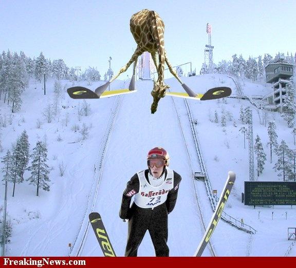 Giraffe op ski's