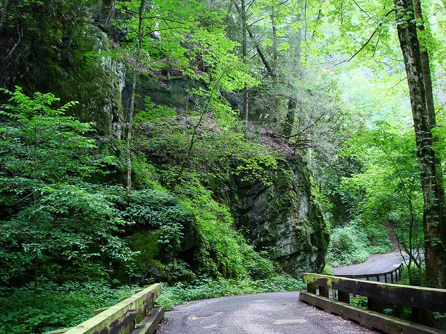 Roaring Fork Motor Nature Trail is one of the most hauntingly beautiful drives on the East Coast.  It appeals to every one of your senses.