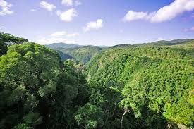 Image result for rainforest