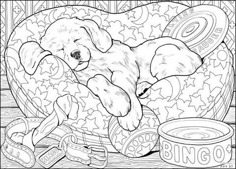 77 best cats and dogs coloring pages images on Pinterest