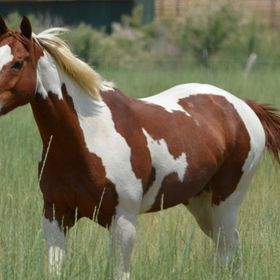 Pretty Paint Horse Animales Que Me Encantan Pinterest
