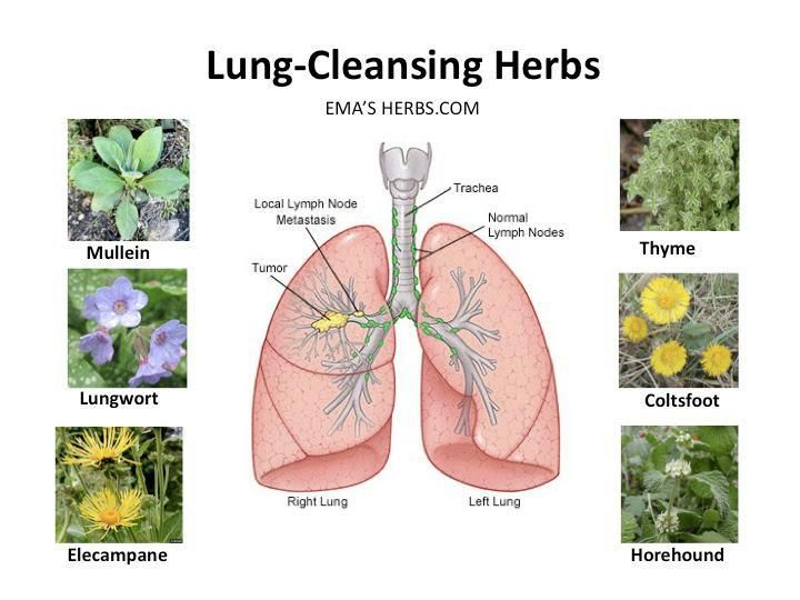 cleaning herbs