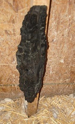 A piece of charcoal attached to the wall inside a coop can give your poultry…