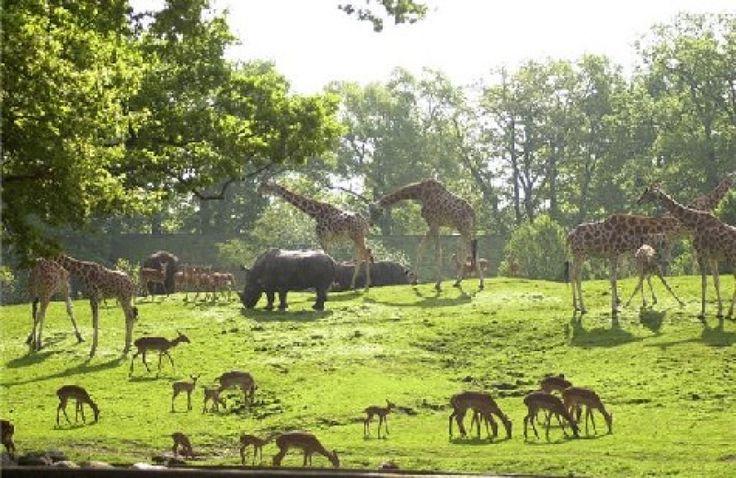 Emmen - oude dierentuin savanne