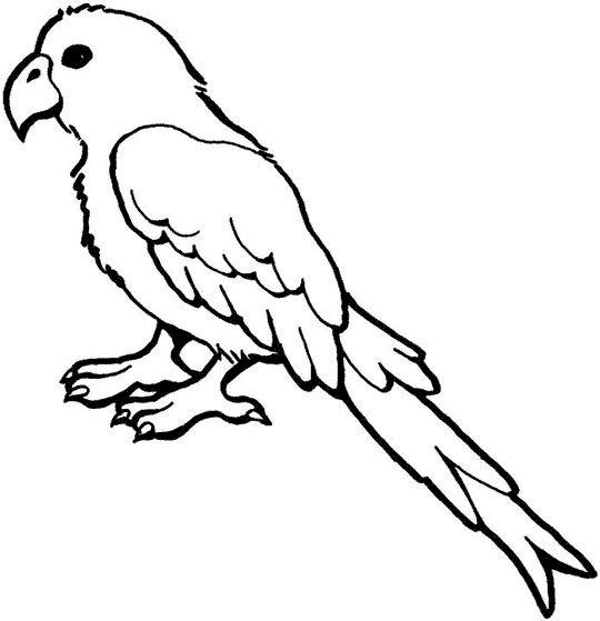 free African Grey Parrot wallpaper wallpapers download