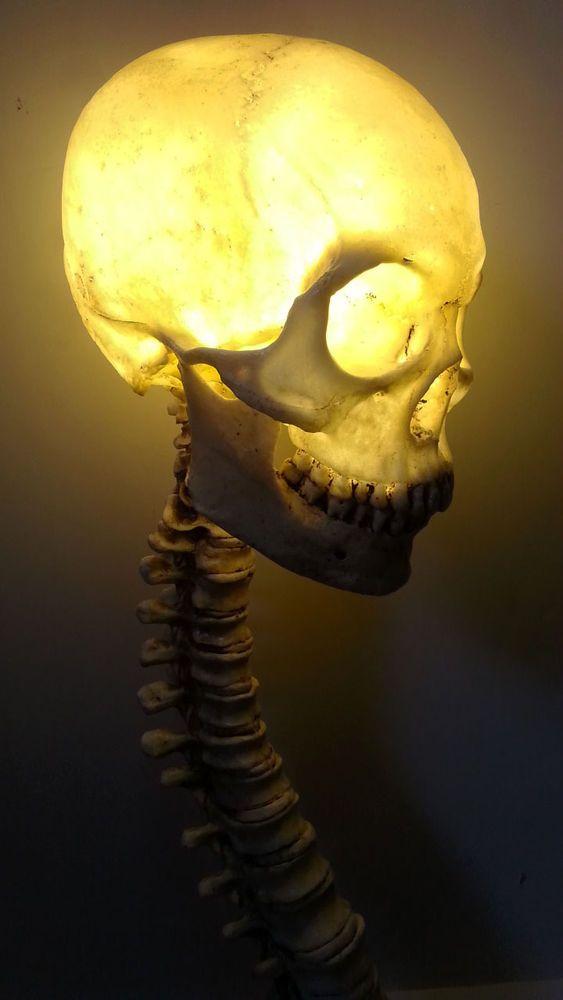 Life Size Human Skull w/ Spine LED Lamp Halloween Prop