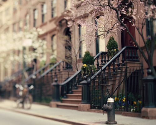 Good god I miss New York..  Not sure this photo was taken there but it sure reminded me of it <3  Every block, every street with its beautiful unique brownstone houses and elegant railings with flower/tree pots really make that particular block on that particular street so unique.. The blossoming flowers really become it.  Till we meet again my darling New York..