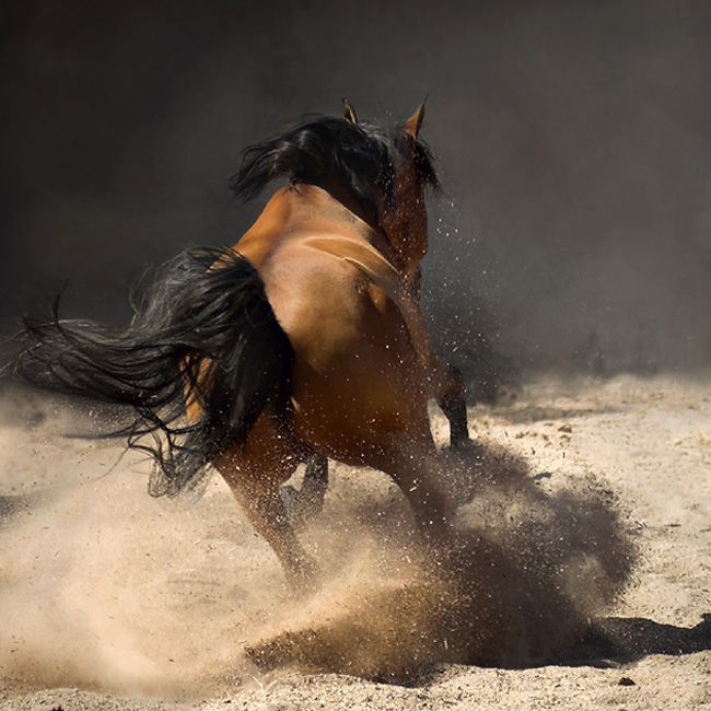 From the album Arabian Horses - by Photo.net photographer Wojtek Kwiatkowski